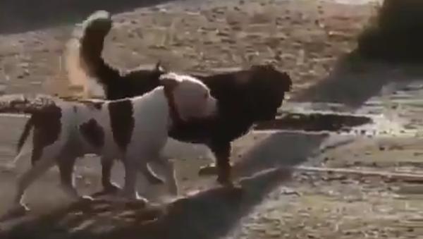 野良犬がフェンスに繋がれていた飼い犬を散歩に連れ出す - Sputnik 日本