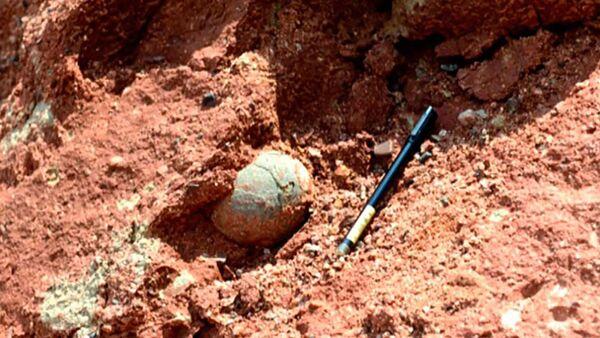 中国南部 6600万年前の恐竜の卵の化石を少年が発見 - Sputnik 日本