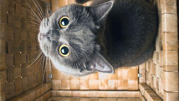猫 - Sputnik 日本