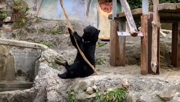 毎日の厳しい鍛錬…日本の動物園でクマが本物のカンフーを披露 - Sputnik 日本