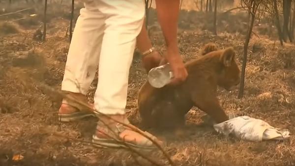 勇敢な女性が森林火災の中からコアラを救助 オーストラリア - Sputnik 日本