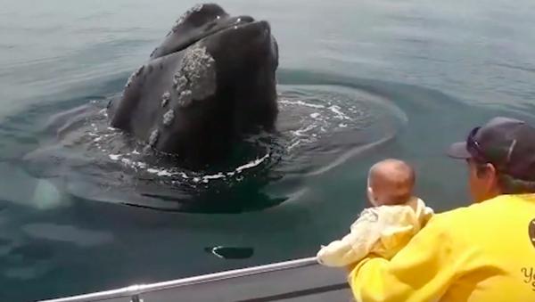 ネットで話題 クジラはどこ? 巨大クジラと赤ちゃんのかくれんぼ  - Sputnik 日本