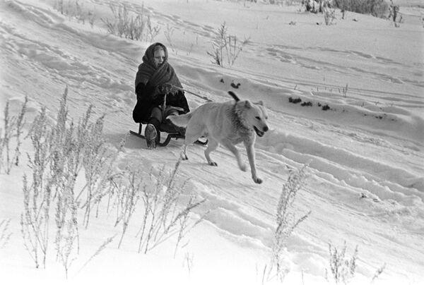 犬ぞりを楽しむ少女 1971年 - Sputnik 日本