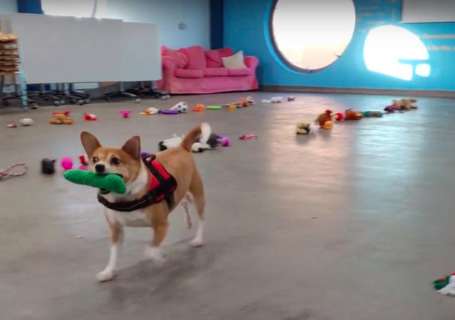 野良犬保護施設 犬は自分で好きなプレゼントを選ぶ