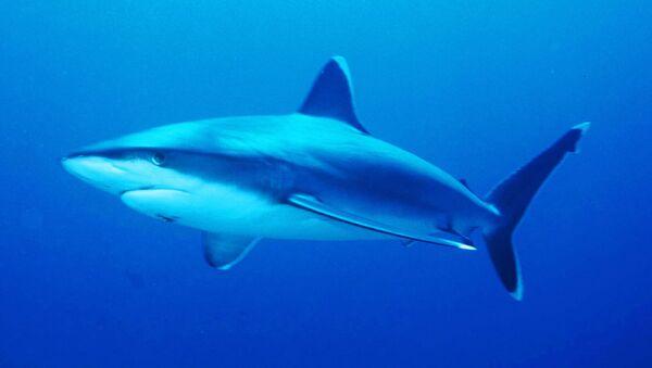 サメ【アーカイブ】 - Sputnik 日本