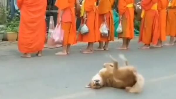 犬のトゥワーク? 僧侶たちの前で... - Sputnik 日本