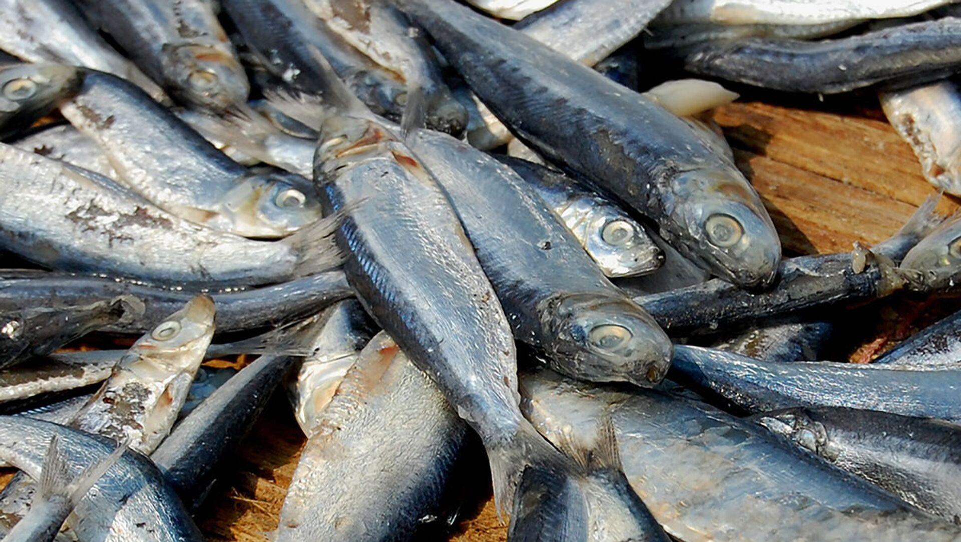 日本の水産物の生産量 2年連続で過去最低 サンマなどの不漁が原因 - Sputnik 日本, 1920, 31.05.2021