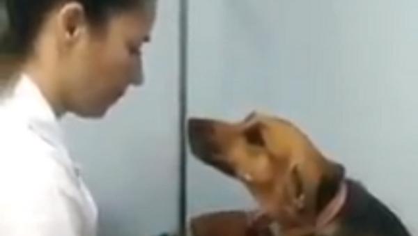 注射もへっちゃら! 獣医さんに夢中の犬  - Sputnik 日本