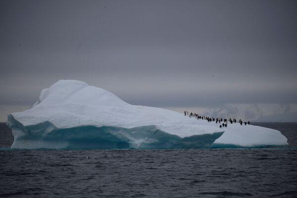 ヒゲペンギンの群れ、ルメール海峡近くに浮かぶ氷山の上を歩く - Sputnik 日本