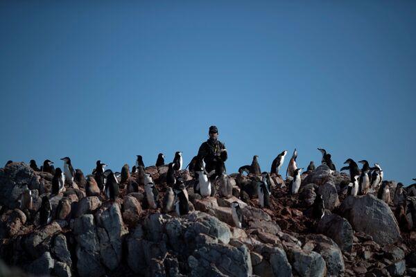 保存生物学者のスティーブ・フォレスト氏 ヒゲペンギンの数を数える  アンヴァース島にて  - Sputnik 日本