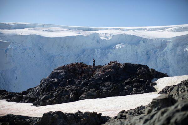 ペンギンの数を数える保存生物学者スティーブ・フォレスト氏 アンヴァース島にて - Sputnik 日本