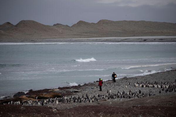 ごみを回収する学者マイケル・ウェシントン氏 スノー島にて - Sputnik 日本