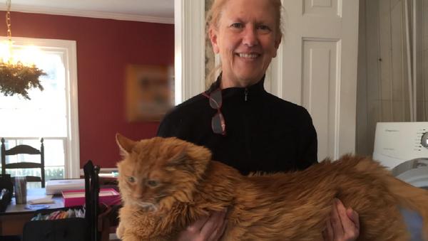 重さ16キロの猫、新しい飼い主が見つかる 米国 - Sputnik 日本