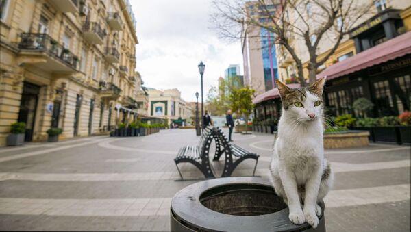 迷子の猫が家から数千キロ先で発見 飼い主と再会を果たす - Sputnik 日本