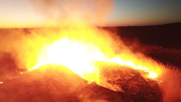 チェルノブイリ立入禁止区域で火災 - Sputnik 日本