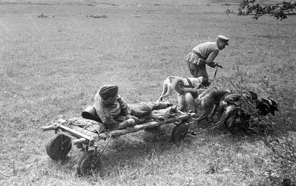 負傷者を戦場から犬ぞりで運ぶ兵士 - Sputnik 日本