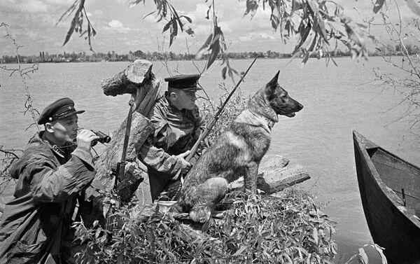 犬を連れて見張りをする国境警備隊員たち - Sputnik 日本