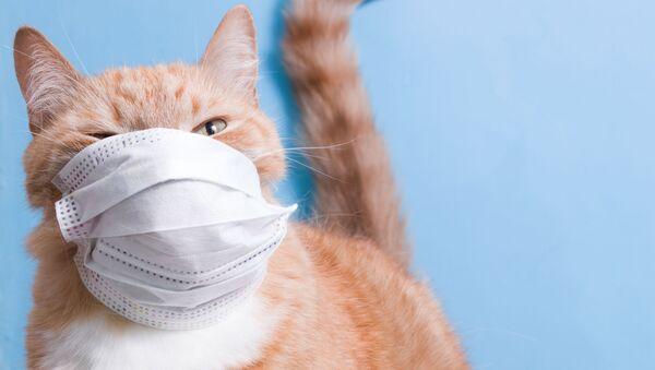 コロナに感染するのはどんな動物? 実験で明らかに - Sputnik 日本